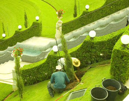 Gardeners Planting a Plant. Stock Photo