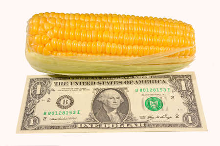 beggary: Corn On The Cob And One  Dollar.
