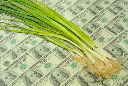 beggary: Spring Onions On The One Hundred Dollar Bills Background. Stock Photo