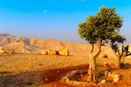 Pejzaż Judei górach w pobliżu Morza Martwego, Zachód słońca