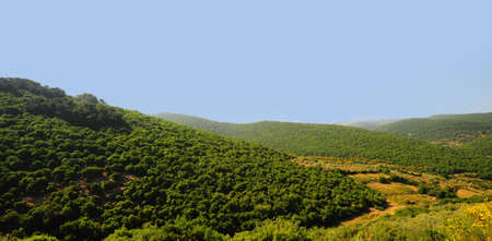 Forest Landscape Of North Galilee In Early Spring, Israel photo
