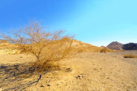 negev: Sand Hill In The Negev Desert, Israel