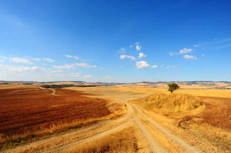 Tuscan Landscape With a Tree At The Crossroads Of Rural Roads photo