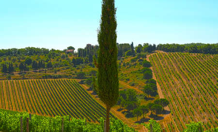 Hill Of Tuscany With Vineyard In The Chianti Region photo