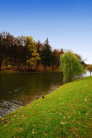 The Pond With Wild Ducks In Autumn Park photo