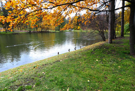 The Pond With Wild Ducks In Autumn Park Stock Photo - 8076422