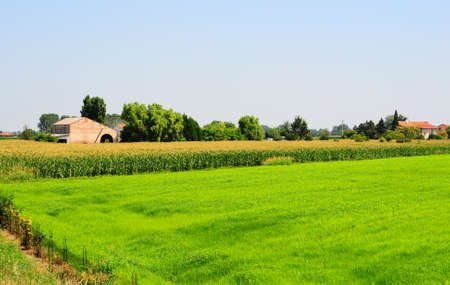 Farmhouses Surrounded By Fields Of Young Corn photo