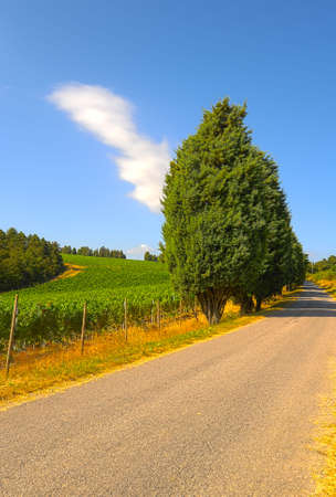 The Asphalt Road Between The Fields Of Tuscany photo