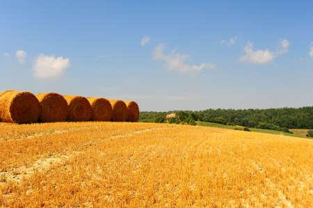 Tuscany Landscape With Many Hay Bales. photo