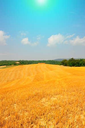 Tuscany Landscape With Many Hay Bales At Noon photo