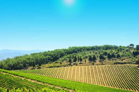 vi�edo: Hill de Toscana con vi�edos en la regi�n de Chianti Foto de archivo