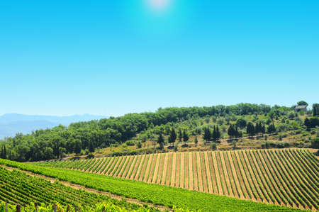 wine country: Hill Of Tuscany With Vineyard In The Chianti Region