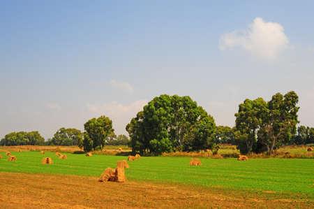 Tuscany Landscape With Many Hay Bales  photo