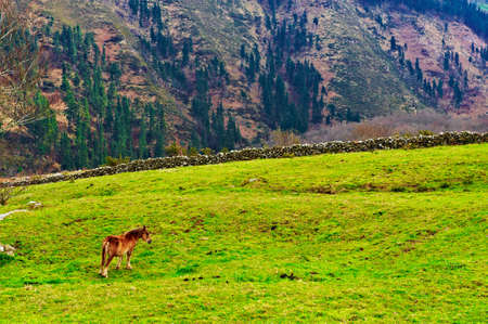 Horse Grazing on Alpine Meadows on the Slopes of The Pyrenees photo