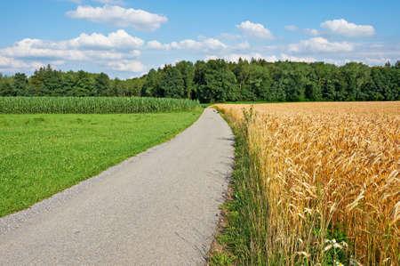 Asphalt Path Between Corn and Wheat Fields in Bavaria, Germany photo