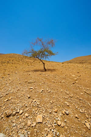 dry stone: Stones and Tree in Sand Hills of Samaria, Israel