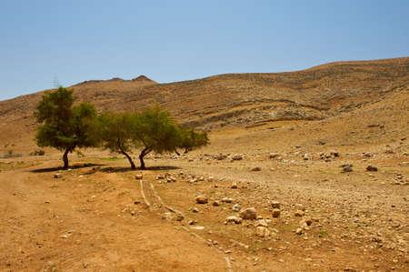samaria: Big Stones and Trees  in Sand Hills of Samaria, Israel