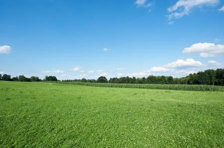 Meadow and Plantation of Fodder Corn in Southern Bavaria, Germany