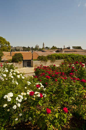 Flowers on the Background of the Ancient Walls of Jerusalem photo