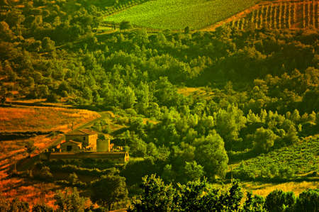 Hill Of Tuscany With Vineyard In The Chianti Region in the Evening photo