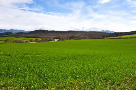 Spanish Spring Fields on the Background of Snowy Peaks of the Pyrenees photo