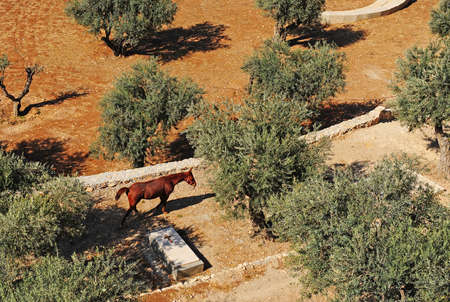 Horse Grazing among the Graves in Kidron Valley in Jerusalem photo