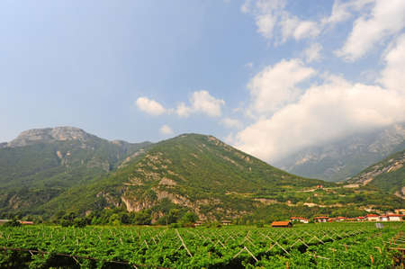 The Vineyard and Farm Houses At the Foot Of The Italian Alps Stock Photo - 12396178