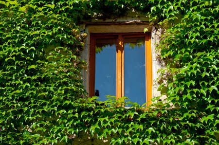 The Window on the Facade of a Stone House Decorated with Wild Vine, France photo