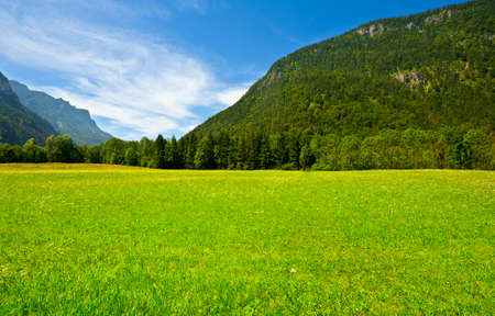 Green Grass  in the Bavarian Alps, Germany Stock Photo