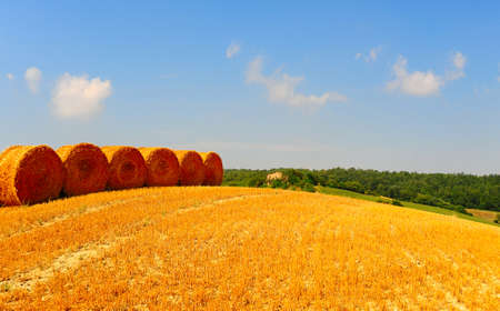 Tuscany Landscape with Many Hay Bales  photo