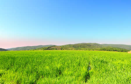 Green Paddy Field in the Hills of Toscana Stock Photo