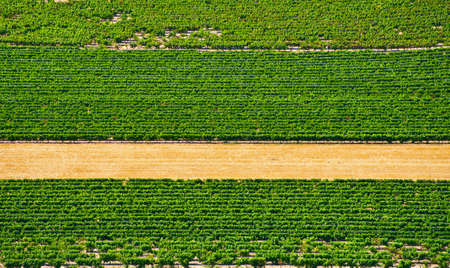 Natural Background of Vineyard in the Southern France photo
