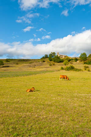 Cows  Grazing on Alpine Meadows in France near the Medieva Church photo