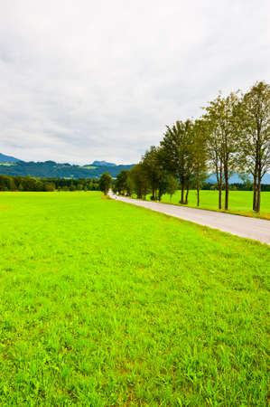 Pasture in Southern Bavaria in the Rainy Day photo