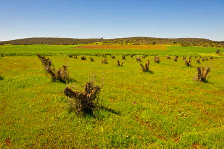 Green Field and  Fresh Slumps in Israel, Spring photo