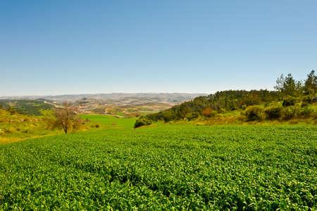 israel farming: Green Fields in Israel, Spring