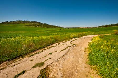 Dirt Road between Green Fields in Israel, Spring
