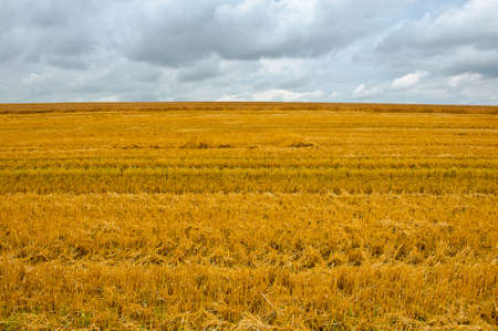 Wheat Field after Harvest,  Bavaria photo