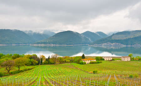 apennines: Vineyard on the Shore of Lake Corbara in Umbria, Italy