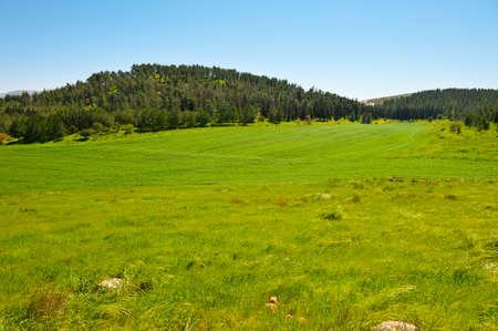 israel farming: Green Field in Israel, Spring