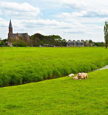 outskirts: Sheep Grazing Outskirts of Dutch Town