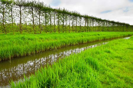 Poplars on the Protective Dam in the Netherlands
