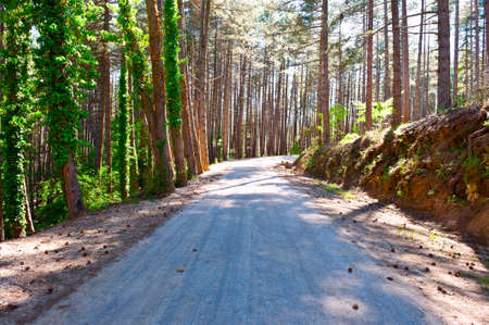 Asphalt  Road in the Forest, Italian Alps photo