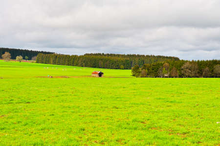 Green Pasture in the Ardennes, Belgium photo