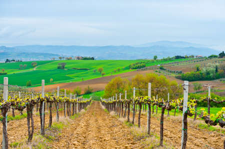 Hill of Tuscany with Vineyard in the Chianti Region 版權商用圖片 - 14386996