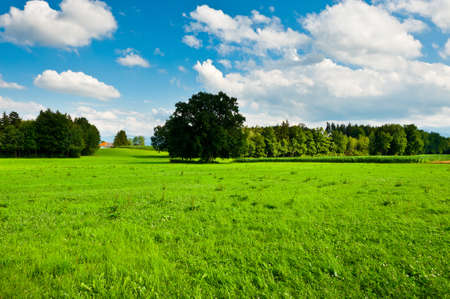 Pasture in Southern Bavaria, Germany photo