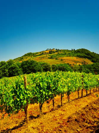 Hill Of Tuscany with Vineyard in the Chianti Region Stock Photo