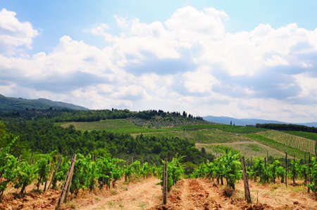 Hill of Tuscany with Vineyard and Olive Plantation in the Chianti Region photo