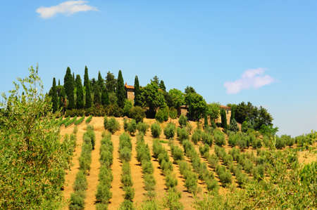 Vineyard and Olive Plantation on Top of the Hill photo
