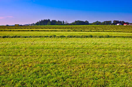 The Lines of New-mown Hay in Bavaria, Germany photo